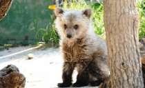 Διεθνές συνέδριο για τη μελέτη της αρκούδας στη Θεσσαλονίκη.